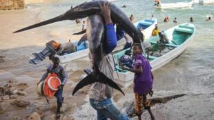 Selon les experts, les Somaliens pêchent 63000 tonnes de poisson par an. Les bateaux étrangers en prennent plus de 100000. La pêche illégale a été l'un des éléments déclencheurs de la piraterie.