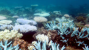 This photo from the ARC Centre of Excellence for Coral Reef Studies shows a mass bleaching event of coral on Australia's Great Barrier Reef.