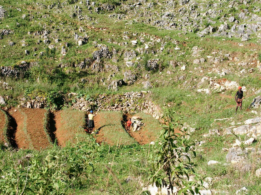 Les paysans pratiquent la culture maraichère, qui épuise les sols.