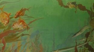 Illustration tirée du livre «Algues - Etonnants paysages».