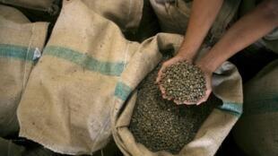 Les cafés africains sont de plus en plus reconnus face à leurs concurrents sud américains.