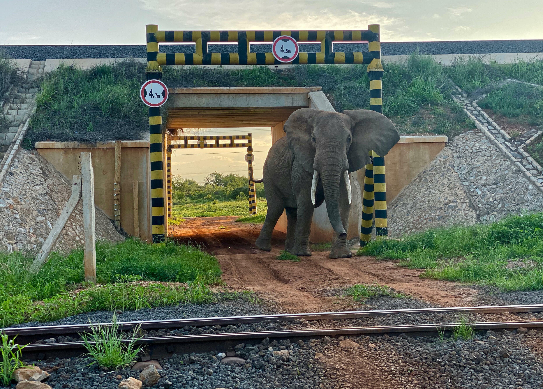 An elephant uses a railway underpass_Tsavo_Kenya_Richard Moller