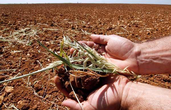 Dans un champ de blé, dans l'ouest de la France, le 13 mai 2011.