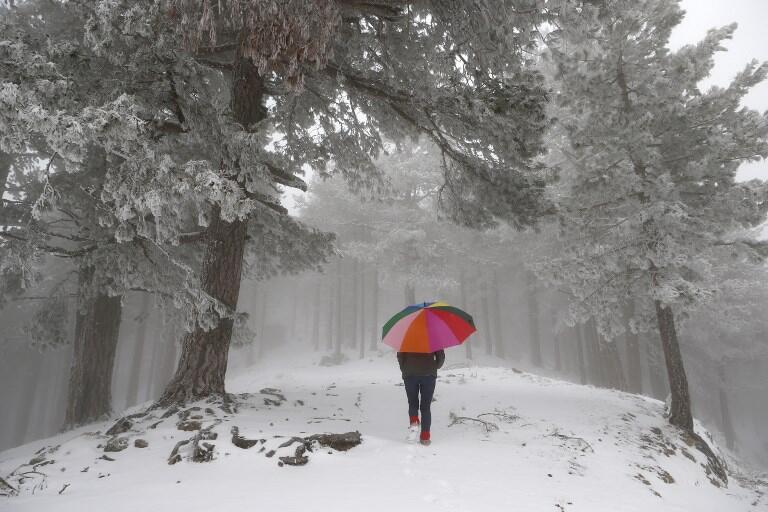 Snow in a forest in Corsica last week