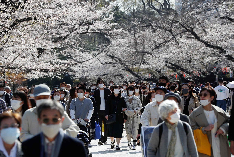 SPRING-CHERRYBLOSSOMS-JAPAN(1)