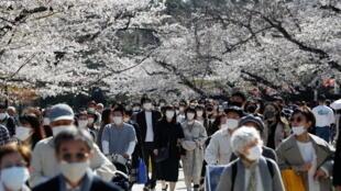 日本民众忽略了政府的警告在大流行季节观赏樱花。2021年3月23日在东京上野公园的照片