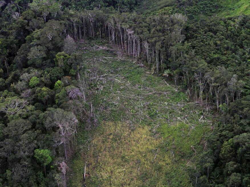 Desmatamento estava diminuindo nos últimos 10 anos.