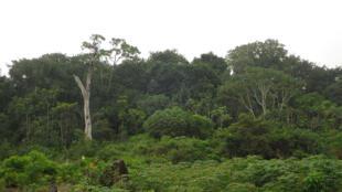 Floresta tropical da Costa do Marfim.