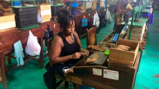 Une ouvrière dans une fabrique de cigare à La Havane à Cuba.