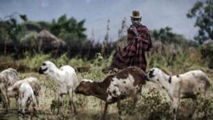 Un berger Karamojong dans le village de Kochunoi près de la frontière kényane (image d'illustration).