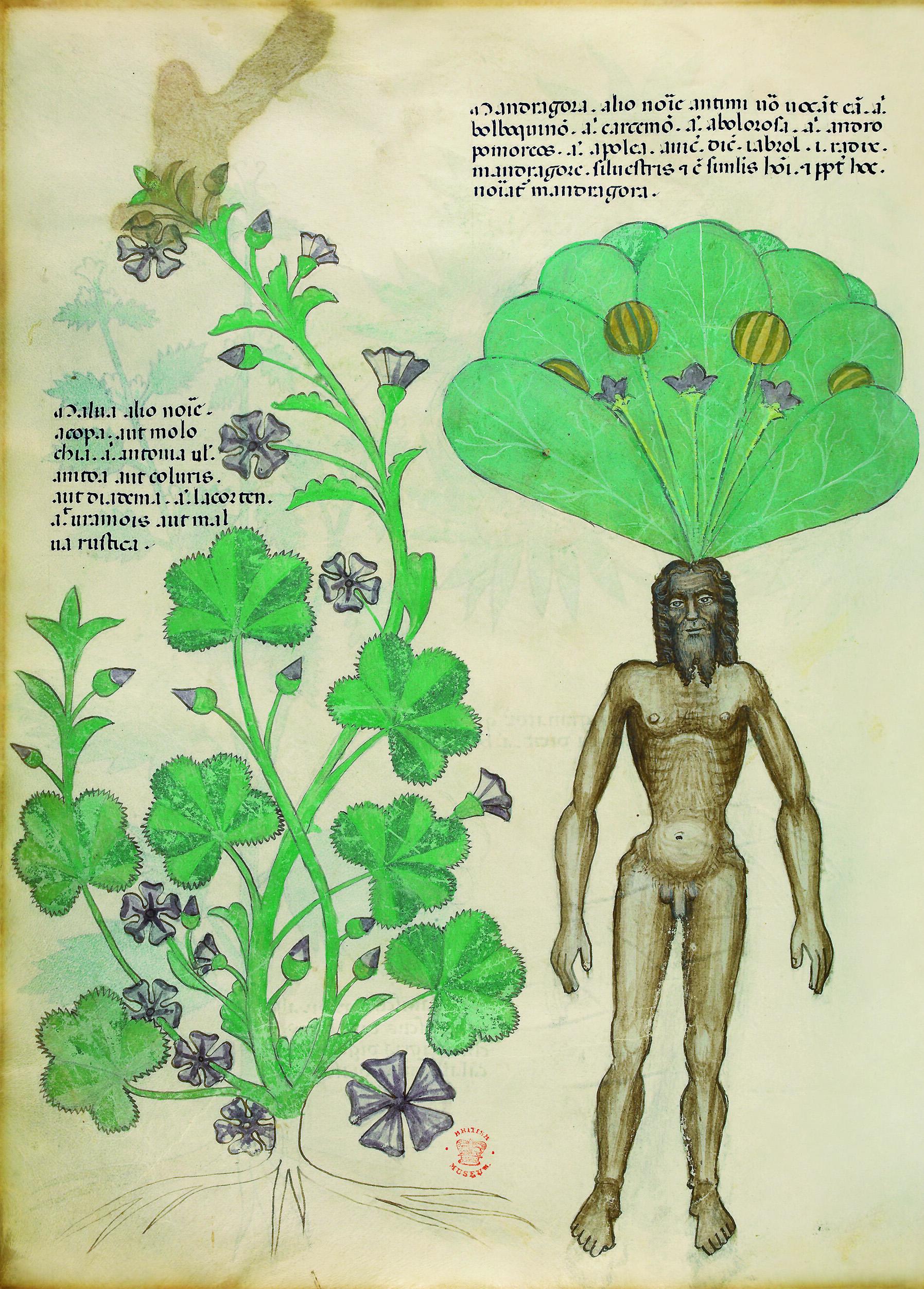 «Травник», XV век.