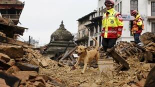Socorristas alemanes buscan víctimas en los escombros con un perro entrenado a tal efecto, Katmandú, 28 de abril de 2015.