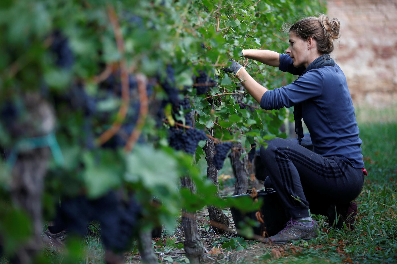 預計2018年法國葡萄酒豐收