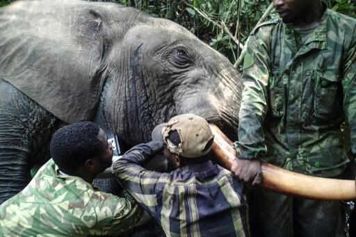 Gabon's national parks agency is bringing hi-tech to the equatorial forests of central Africa in a bid to save thousands of elephants from well-drilled and armed poachers