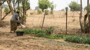 Au Sénégal, des organisations dénoncent le manque de volonté des Etats face aux privés qui accaparent des terres.