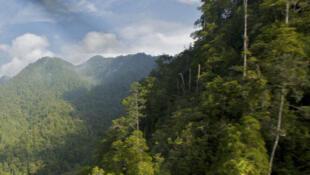 Les montagnes Foja en Papouasie Nouvelle Guinée.