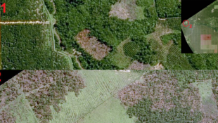 Au nord de Sumatra, Indonésie. Images du satellite SPOT 6. La précision permet de différencier les types de plantations (Photo 1), le type de végétation, les incendies (en rose, photo 2) et la déforestation éventuelle.