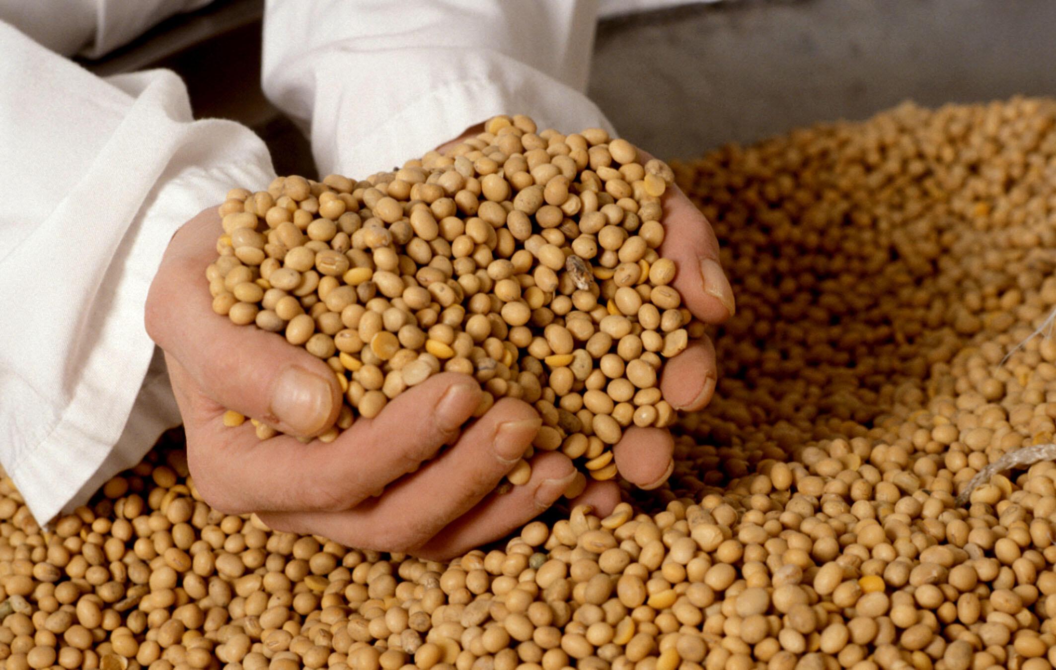 A projeção é de mais de 107 milhões de toneladas de soja