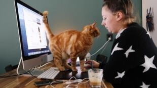 La vie privée des employés est protégée dans nombreux pays, mais les entreprises surveillent de plus en plus leurs activités en télé-travail. Ici, une employée et son chat à Sassenheim, aux Pays-Bas le 2 octobre 2020.