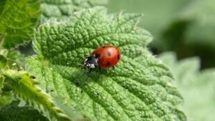 La population d'insectes décroît très rapidement en Allemagne et en Europe, selon une étude.