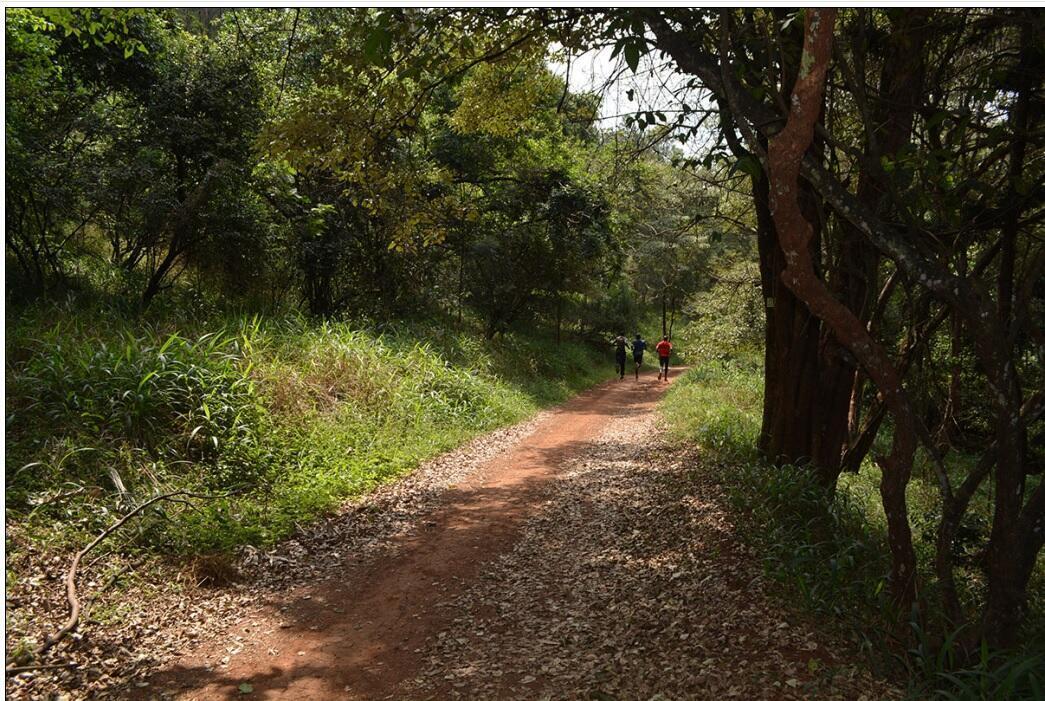 Karura Forest in Nairobi