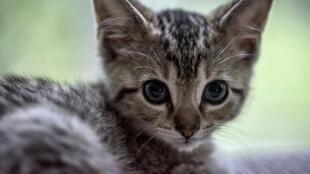 В каком состоянии находится кошка, не уточняется (архивное фото)