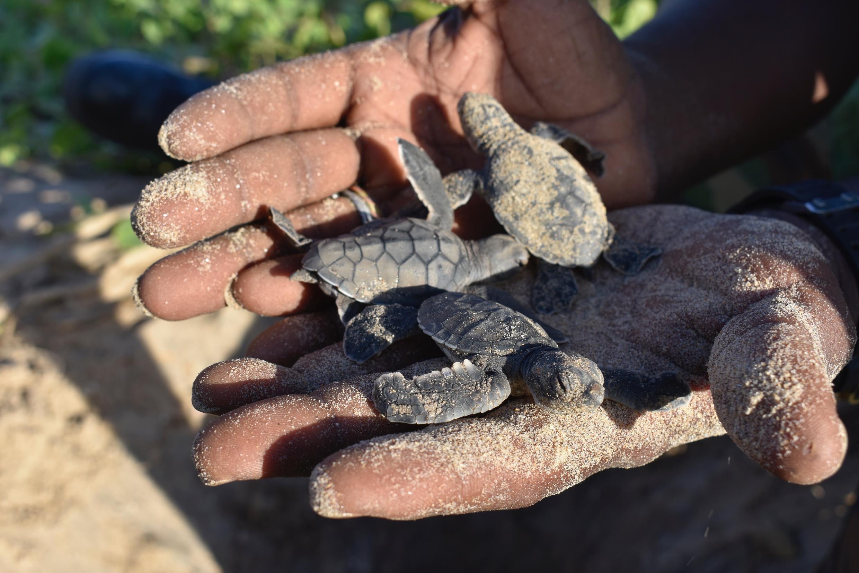 Sénégal - Tortues - Mer - bébé