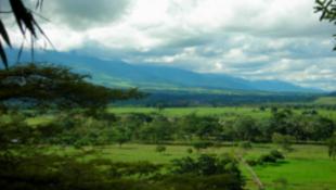 Les Llanos en Colombie.