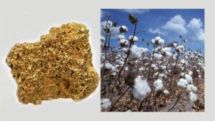 Le Burkina Faso est le premier producteur africain de coton, et le sixième producteur d'or du continent.
