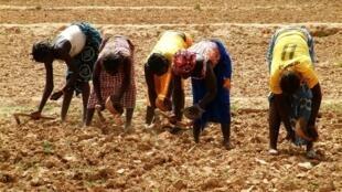Des femmes plantent du millet, à Rassomde au Burkina Faso.