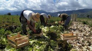 Les partenaires sociaux ont donc inclus dans leurs recommandations « les travailleurs de l'ombre » peu considérés traditionnellement, les saisonniers donc mais aussi les indépendants, les travailleurs migrants.