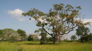 La région verte de la Casamance, au Sénégal, source de conflit depuis 35 ans.