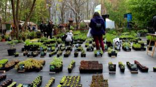 Au Prinzessinnengarten, la bourse d'échange des plantes bat son plein. Dans le monde, Berlin est la ville où l'on trouve le plus de jardins urbains.
