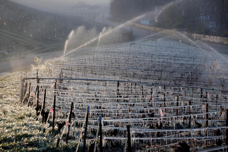 Riego con agua a primera hora de la mañana para proteger los viñedos de los daños causados por las heladas en las afueras de Chablis, Francia, 7 de abril de 2021.