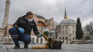 Un perro callejero le da la pata a un trabajador del ayuntamiento de Estambul en la vacía plaza Hagia Sophia el 1 de abril de 2020