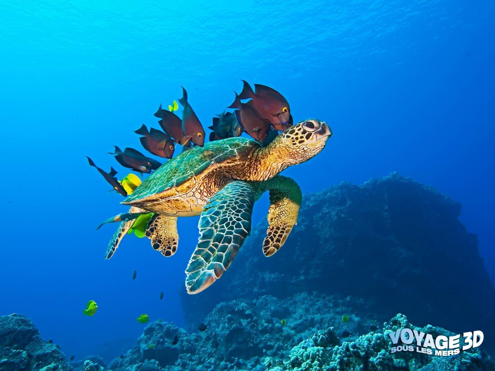 Voyage sous les mers en 3D