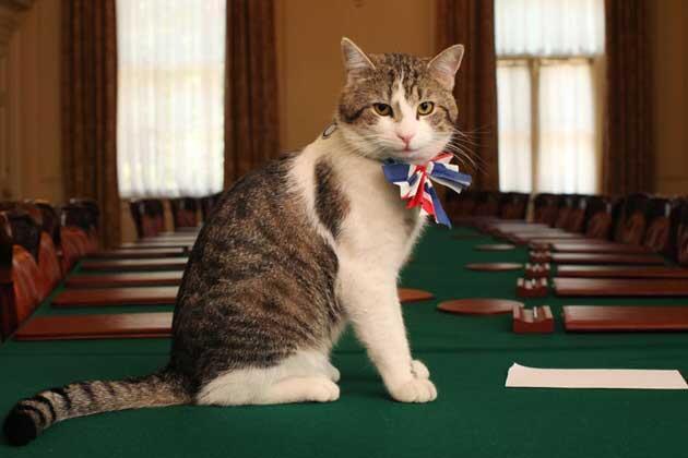 Larry vive no número 10 da Downing Street desde 2011.
