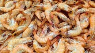 En juin 2020, l'Équateur a exporté moitié moins de crevettes vers la Chine qu'en mai 2020