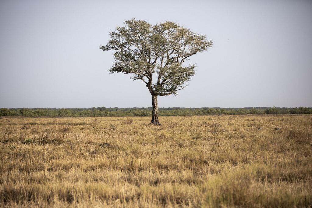 Sénégal - culture riz