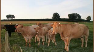 Melhor alimentação e gestão do pasto reduziriam a emissão de gases em 30%, calcula a FAO.