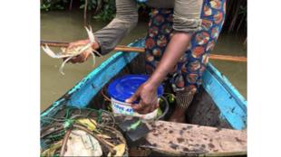Pêche crabe Bénin