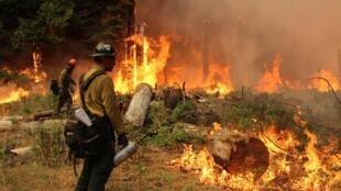 Des pompiers luttant contre l'incendie dans le parc national de Yosemite, le 1er septembre 2013.