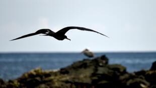 Imagen de archivo de las islas Galápagos.
