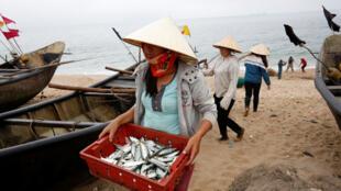 Một phụ nữ thu cá trên bãi biển ở làng Đông Yên, gần nhà máy Formosa, tỉnh Hà Tĩnh, Việt Nam, ngày 31/03/2017.