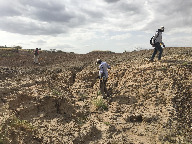 Plusieurs chasseurs de fossiles expérimentés viennent de toute l'Ethiopie pour participer à la mission et repérer les fossiles à la surface.