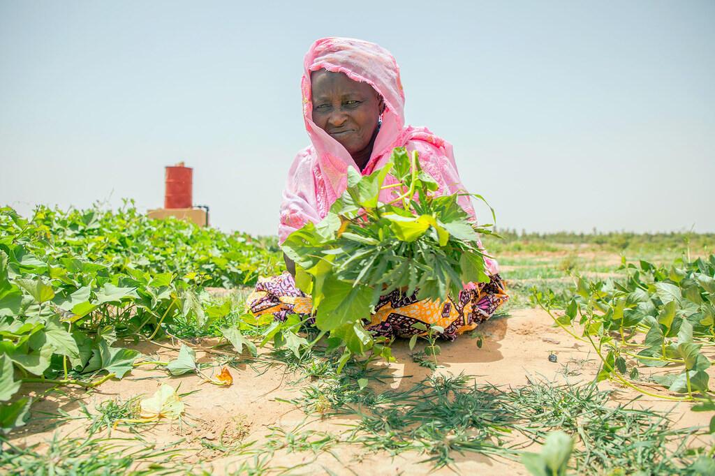ONU: la Covid-19 engendre une montée en flèche du nombre de personnes souffrant de la faim dans le monde