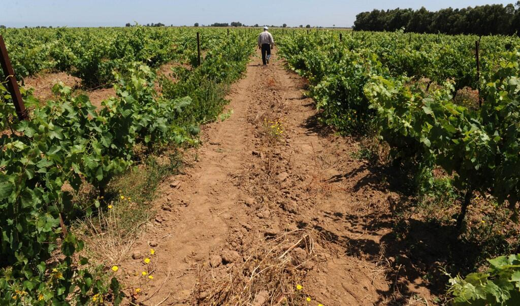 Un champ de vigne dans la région de Casablanca. (Photo d'illustration)