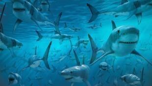 Tubarões estão entre as espécies mais ameaçadas