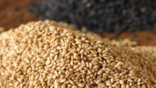 Le Nigeria a produit, sur la dernière saison, 700000 tonnes de sésame, et il en exporte 90%.