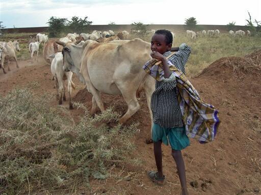 Segundo a FAO, 925 milhões de pessoas têm fome no mundo